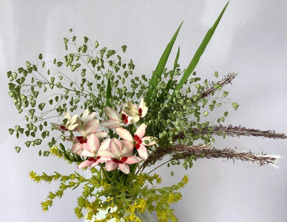 花便り2020-3-01
