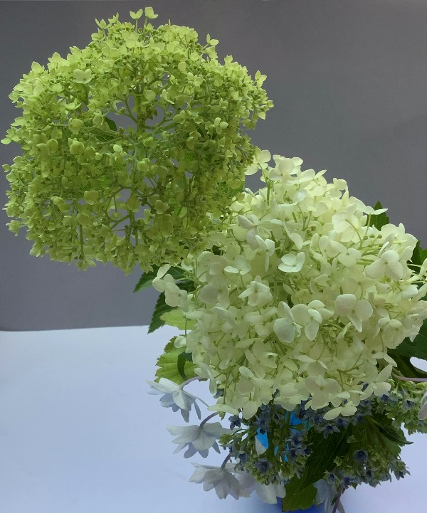 花便り2020-5-04
