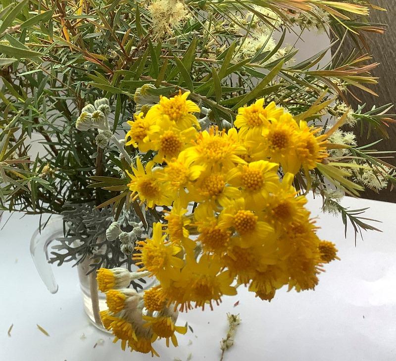 花便り2020-5-06