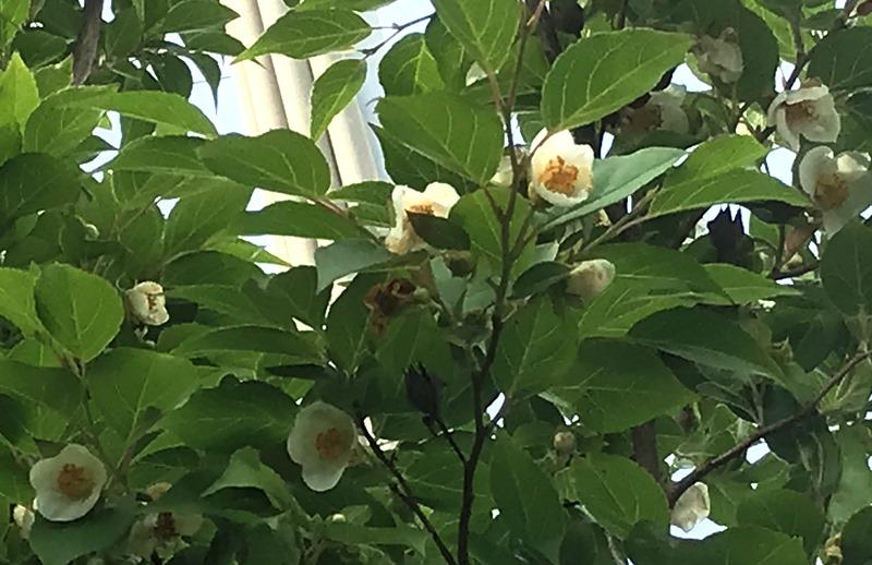 花便り2020-5-08