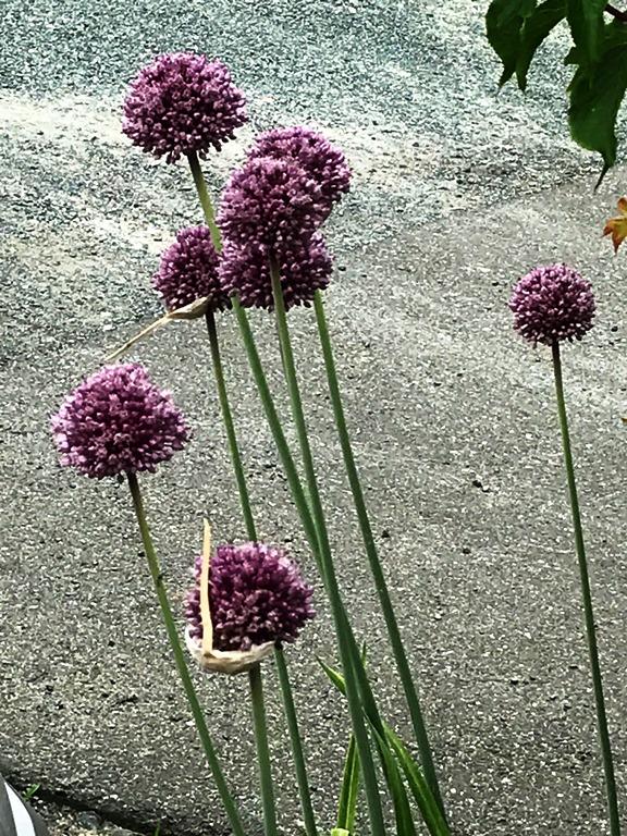 花便り2020-5-09