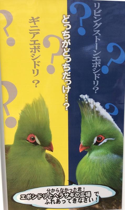 花鳥園2019-13